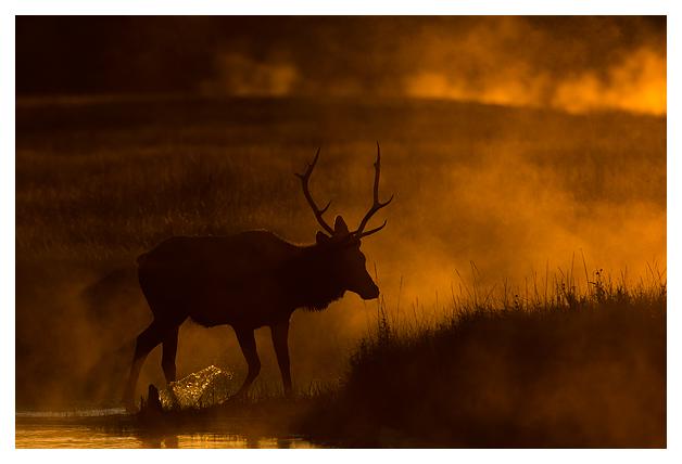 Bull-Elk-in-the-mist-7