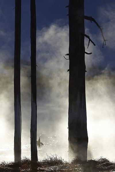 NI-Tree-in-steam