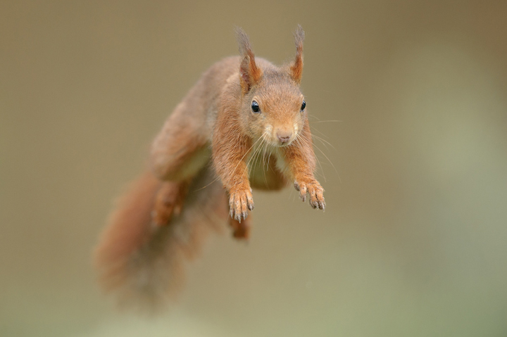 Frustrating and rewarding natures images - How do you keep squirrels out of your garden ...