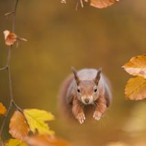 Jump-Forest-Nikon-duits 212