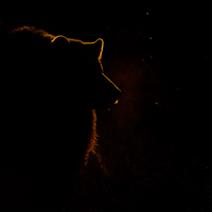 brown-bear-at-dawn Edwin Glanzlichter web 212