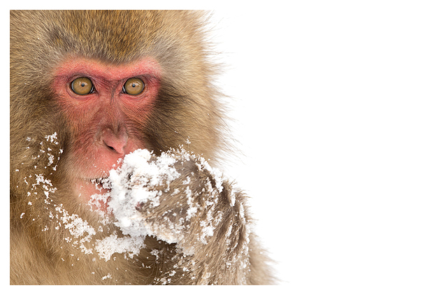 Snow Monkey blog