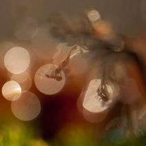 BWPA-2015-Shiny-black-ant_Paul-Hobson
