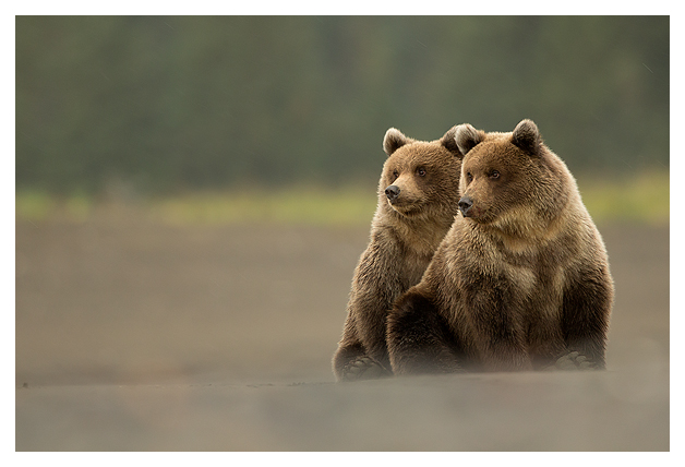Grizzly Cubs 4