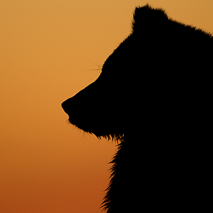 Alaskan Grizzlies Sept 301