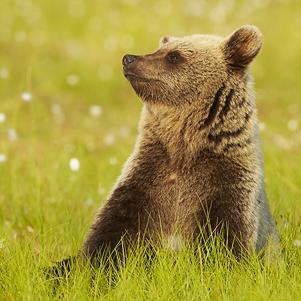 Bears 1 301