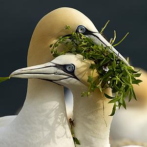 Seabird Spectacular 301