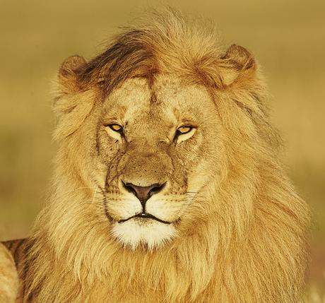Mara Cats 460