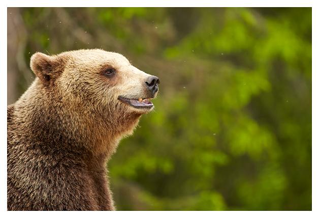 Bear-female-mother-2016