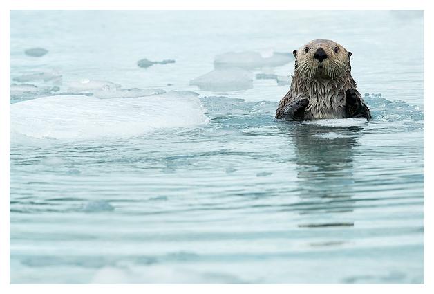 sea-otter-resting-1