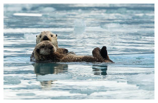 sea-otter-resting-2
