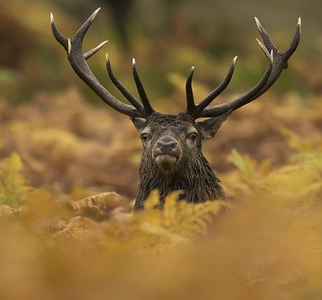 deer_and_birds_of_prey_460_429