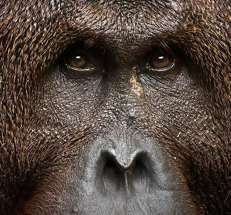 indonesia_primates_and_dragons_460_429
