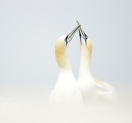 seabird_spectacular_460_429