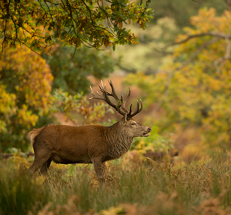 natures images wildlife photography holidays trips and workshops